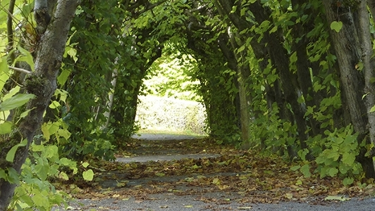 Grünes Tor aus Bäumen