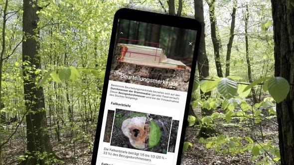 Handy mit Stockfibel-App Beurteilungsmerkmale; im Hintergrund Wald