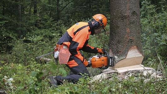 Mann beim Arbeiten mit der Motorsäge am Baum